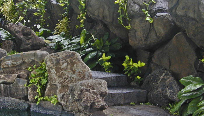 Stone stairs climb through this Hawaiian rock garden.